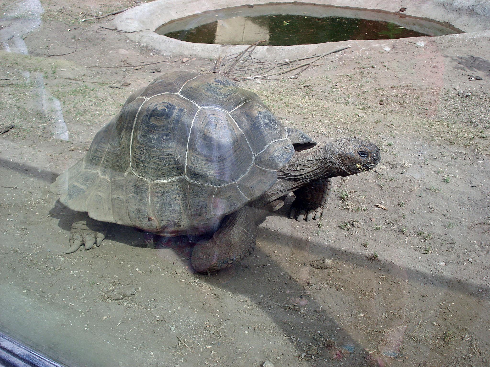 Сухопутные черепахи в Московском зоопарке