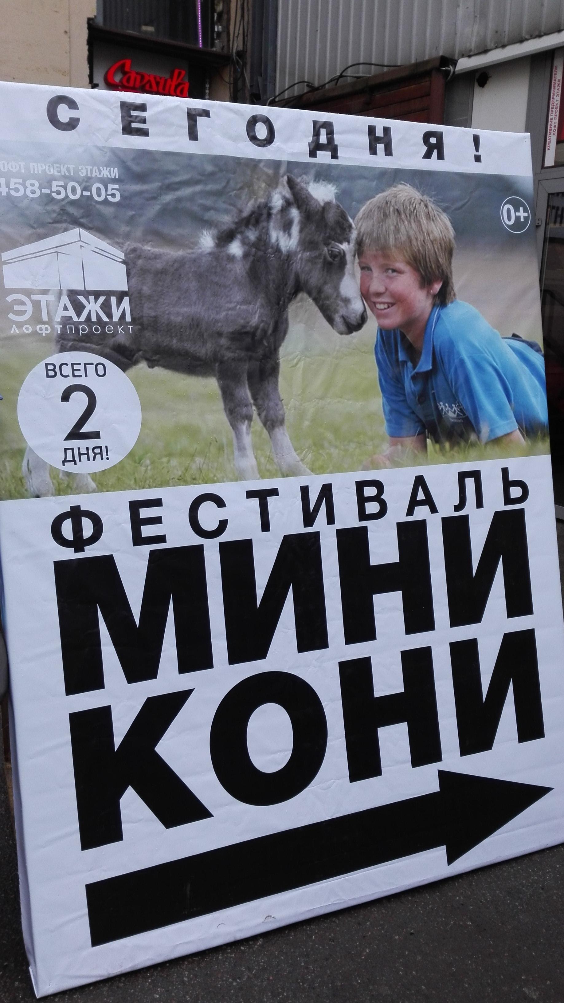 Мини-кони в Санкт-Петербурге